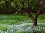 New Hampshire flowers